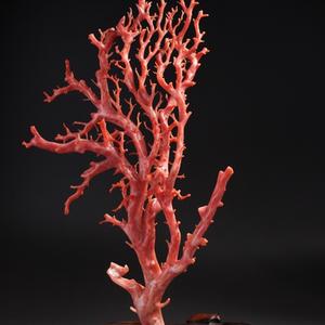 海外 回流 珊瑚 树 摆件