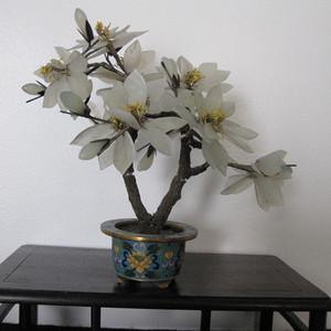 白玉树小盆景