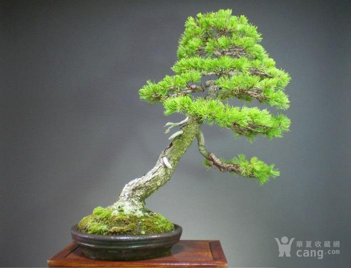 清末民国松亭款紫砂焐灰长圆盆图5