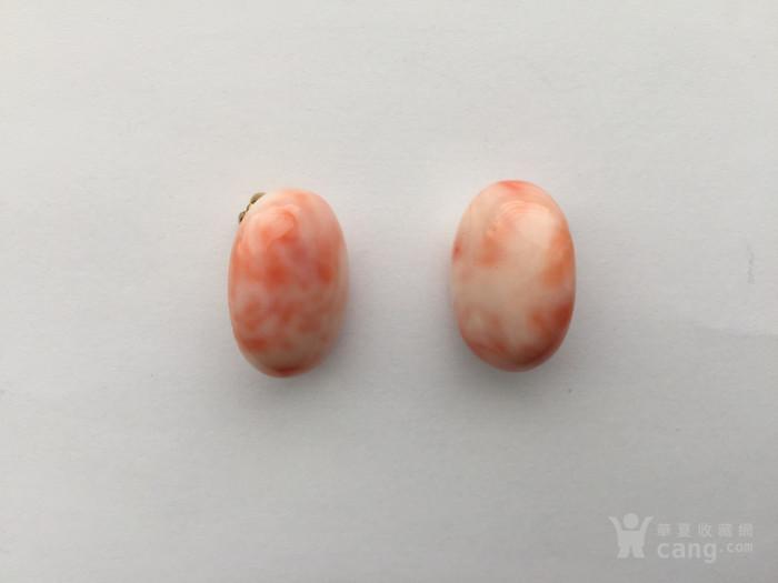 N9271 回流天然粉珊瑚大椭圆形耳夹图4