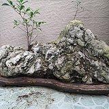 天下奇石,稀世珍品