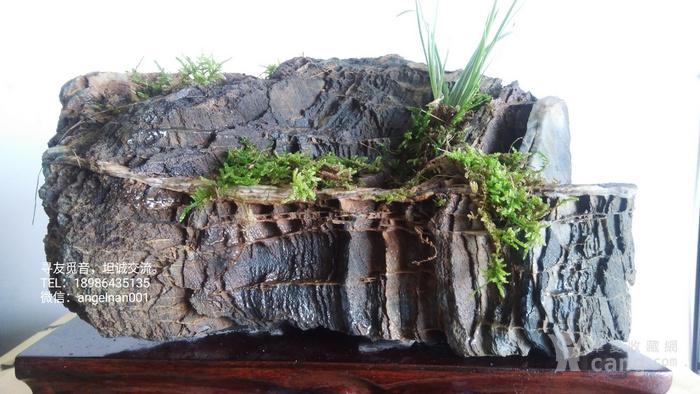 硅化木 树化石 树化玉景观原石 独一无二  放漏图1