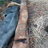8米长乌木