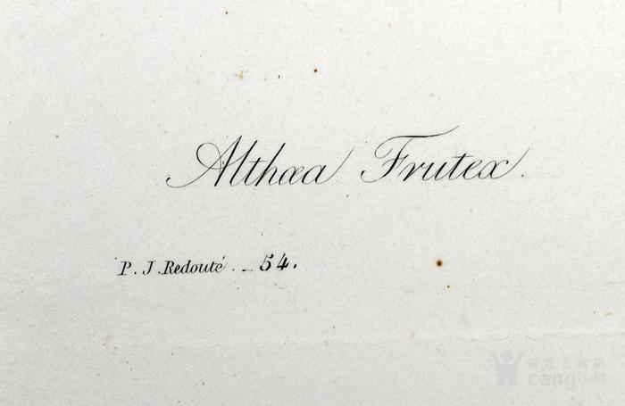 欧洲艺术大师蕾杜德花卉圣经1827年原版铜版画木槿图3