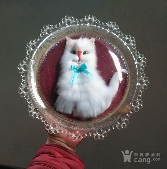 漂亮,小白猫 绒制琉璃摆盘图1