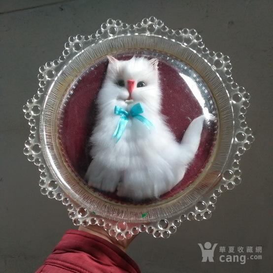 漂亮,小白猫 绒制琉璃摆盘图9