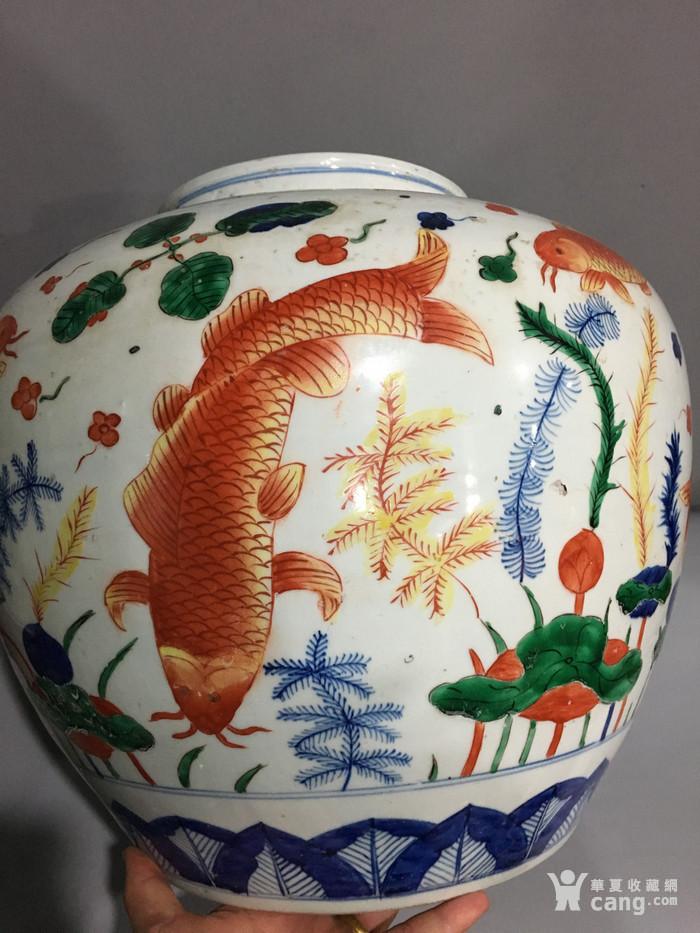 五彩鱼藻纹大罐 万历 图8