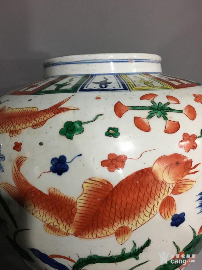 五彩鱼藻纹大罐 万历 图9