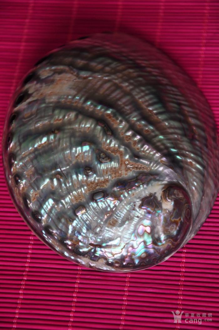 老贝壳图5